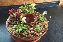 Plantas <3