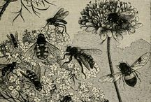The Golden Beehive