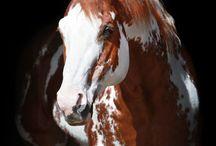 Horse :p