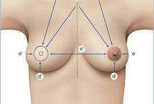 Pratique péri-mamaire:reconstruction,dermo...
