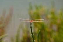 Naturaleza /  La Naturaleza en su estado más puro. Flora y fauna. / by Fotografias para publicaciones