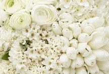 WEDDINGS | White Flowers