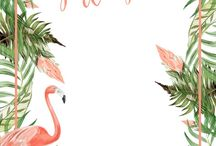 Background flamingo