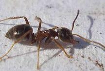 Ameisen und Schnecken Tipps