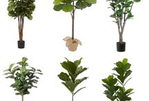 Interior Trees