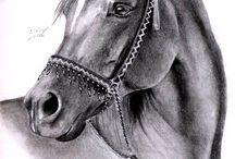 Koně - malba, kresba