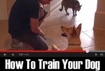 Spike's Training / Tips and tricks for furry friends