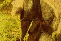GANDALF / nirebarregozoak,blogspot.com