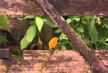 Videos - Vida rural - Countryside life - Brasil / Estilo de vida nos sítios e fazendas do Brasil. Lifestyle in farms and ranches in Brazil.