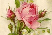 Lovely Vintage Roses and Flowers and Things / Vintage Photos of Flowers, Roses, Things and People, Illustrations, Paintings, Antiques, Old Photos