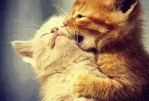 Too cute :-)