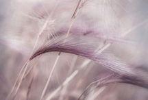Palette || Mauve