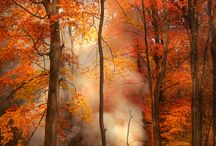 Autumn = Herbst / by Rebekah Herbst