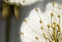 ✾ Flowers ✾