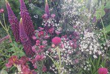 Chelsea Flower Show Gardens