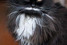 FUNNY cat ;)