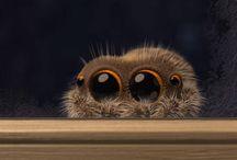 Lucas spider