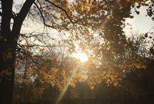 "My autumn / Фотограф Полина Ермолаева  Instagram ""poldae"""