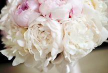 Pretty things! / by Amber Pesante
