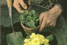 Tasha Tudor ~ Gardener Extraordinaire / by Willow