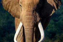 Elephant Explorer - 3D Character