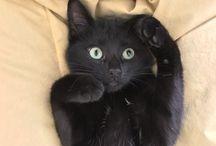 cats (=^ェ^=)