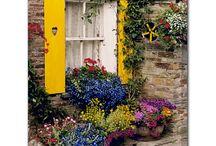 Λουλούδια στα παράθυρα