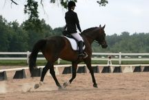 Horse Supplements / How can supplements help your horse and some of our favorites