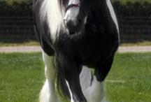 Allerlei paarden