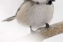 natura ptaki