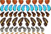 Vintage birds/ butterfly's