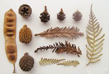 nature table / I love collecting tiny treasures and bringing them home to marvel at...