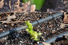 odla grönsaker/örter