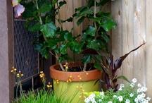 Garden / by Tanya Lynch