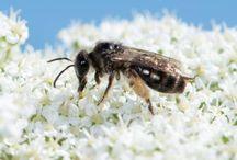 NZ Bees