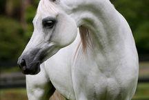 horses of Five Wells Farm