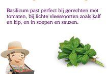 Tip van Flip