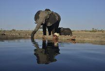 Die besten Pools in Afrika / Hotels  & Lodges