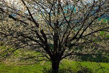 Primavera / Incastonato nel cuore dell'Appenino Tosco-Romagnolo, al confine tra Romagna e Toscana, Bagno di Romagna Terme è un piccolo borgo dall'antichissima storia, nella suggestiva cornice del Parco Nazionale Foreste Casentinesi www.bagnodiromagnaterme.it