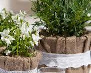 Φυτά - διακόσμηςη