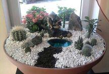 kaktus dizayn