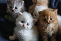 Kätzchen / Kätzchen