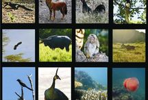 Explore Taman Nasional Baluran [operator : Explore Solo] / Explore Taman Nasional Baluran September 13 - 15, 2013 Link : http://triptr.us/tl