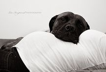 Maternity | Pets