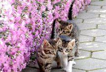 Котики коти
