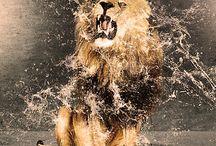 Lions!! / by Judie Nash