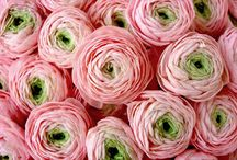 Flower varieties / Cut flower varieties - florist guide