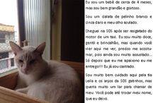 Gatinhos para adoção / Aqui estão todos os gatinhos disponíveis em nossa sede para adoção responsável. Caso tenha interesse em algum gatinho entre em contato através do e-mail: sosgatinhos@gmail.com
