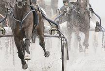 Harness racing / trotting