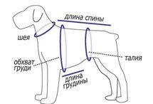 для собаки